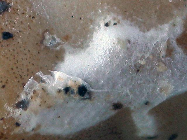長期保存時の白カビの発生例(等倍)